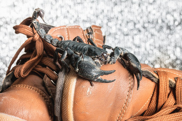 Scorpion on shoes