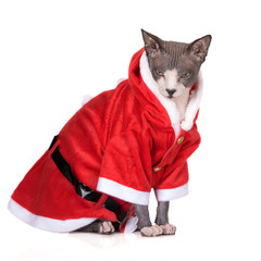 funny canadian sphynx cat in a santa costume