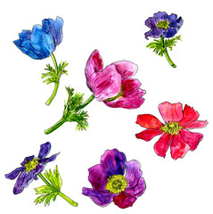 set of watercolor drawing flowers