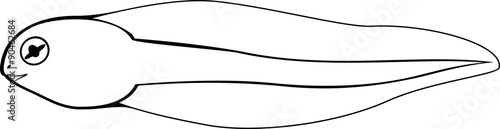 Coloring Page Tadpole Stock Image And Royalty Free Vector Files On