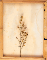 Vintage image of dried flowers in the canvas frame