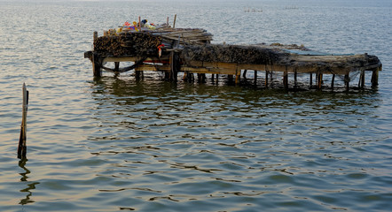 Piles and small bundles of cane for fishing di paranza in the lake of Lesina. Apulia, Italy