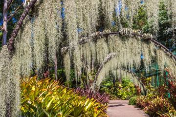 arches with lichen