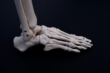Lateral View of The Foot