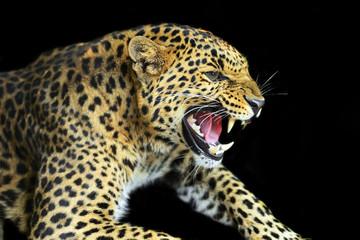 Fototapete - Wild Leopard