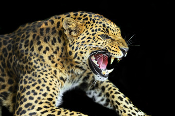 Wall Mural - Wild Leopard