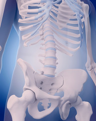 medically accurate illustration - lumbar spine