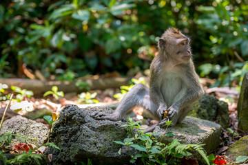 Baby monkey, Bali, Indonesia