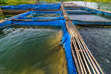 Fish farms with blue net and bamboo pathway