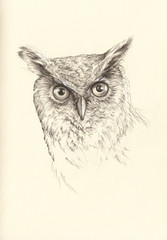 pencil drawing head owl