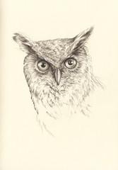 pencil drawing head owl