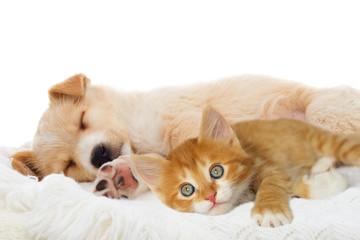 Photo sur Aluminium Chat puppy and kitten