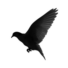 Silhouette of a flying dove on a white background