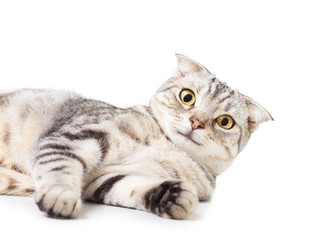 cute Cat lying on the floor.isolated over white background.