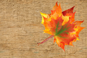 colorful autumn maple leaves bouquet over wooden texture