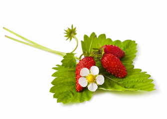 Wild strawberry with flower isolated on white background