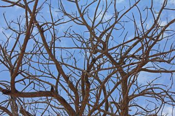 Dead tree on The blue sky