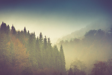 Poster Morning with fog Autumn landscape in mountain. Colorful trees in fog and rain.