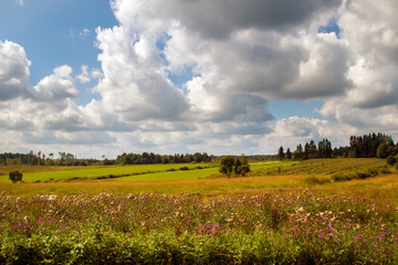 Rural landscape. Panorama meadow farm fields. Nature in summer. Wheat and mown grass. Big clouds. Rustic panoramic picture. Autumn meadow.