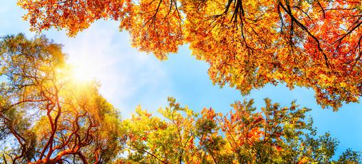 Wall Mural - Baumkronen, blauer Himmel und Sonne im Herbst