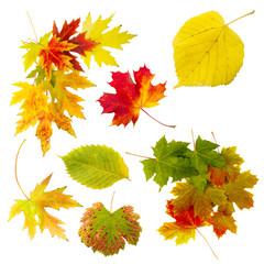 verschiedene Herbstblätter Freisteller