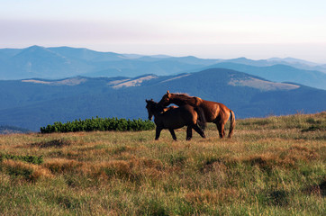 horses on the mountain pasture with mountains in the background