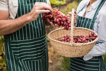Winegrower couple holding a basket of grapes