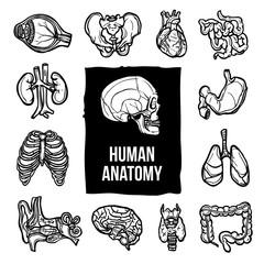 Anatomy Icons Set