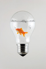 Fish inside the Light Bulb