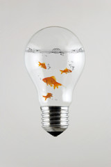 fishes inside the Light Bulb