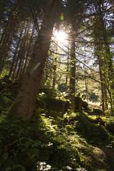 Wald in der Sonne