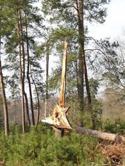 Photos illustrations et vid os de tronc d 39 arbre - Arbre fruitier comme bois de chauffage ...