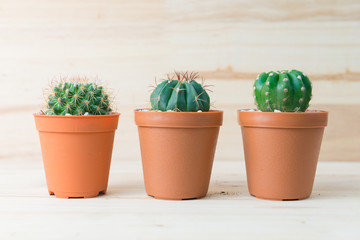 Cactus collection in pot on woody background.