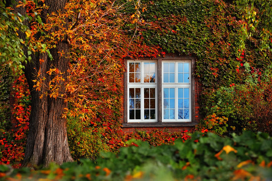 autumn leaves with white window