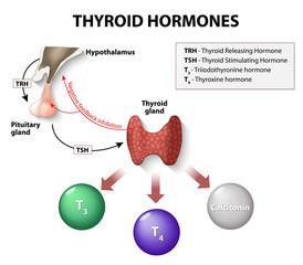 Fototapeta thyroid hormones obraz