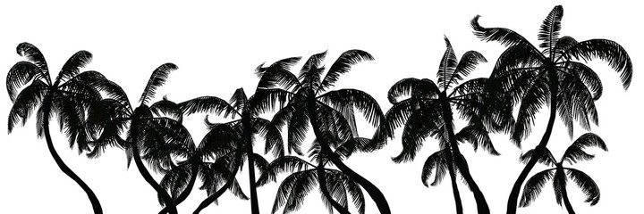 Palm trees silhouette on white background