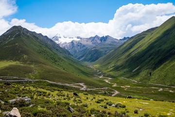 東チベット 草原