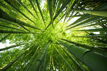 Wall Murals Bamboo Green bamboo nature backgrounds
