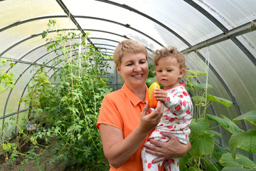 The woman gives to the little granddaughter sweet paprika in the greenhouse