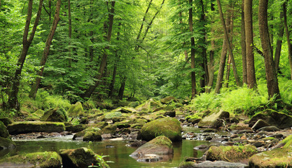 Wall Murals River river in the spring forest