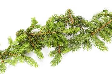 Decoration of a fir tree