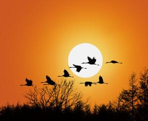 Zugvögel bei Abenddämmerung
