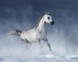 Grey arabian horse galloping during a snowstorm