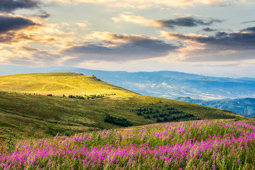 wild flowers on the mountain hill at sunrise