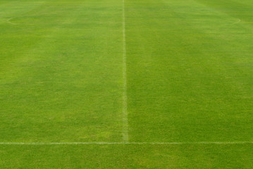 beautiful pattern of fresh green grass for football sport, footb