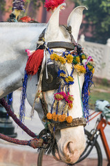 Close up of a colorful horse head at Agra, India