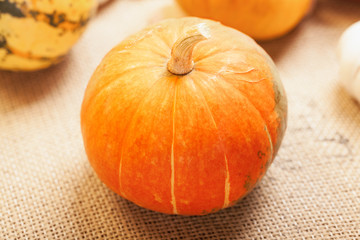 Close up of small pumpkin
