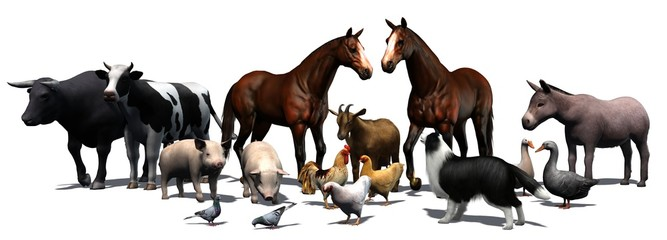 Farm Animals - separated on white background