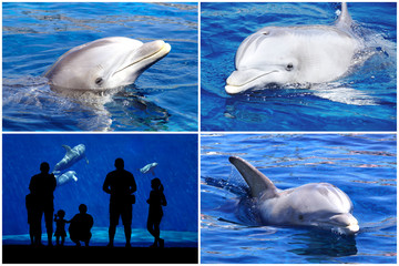Dolphin and silhouette.