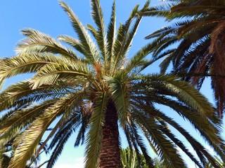 Palme im Sonnenschein